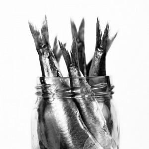 Ultimas capturas de anchoas