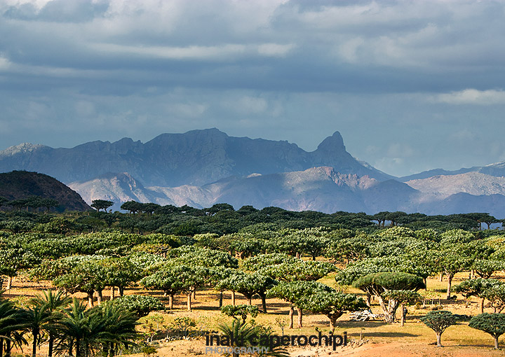 Homhill Plateau