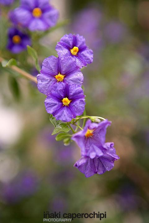 Flora en el Monte Santa Barbara