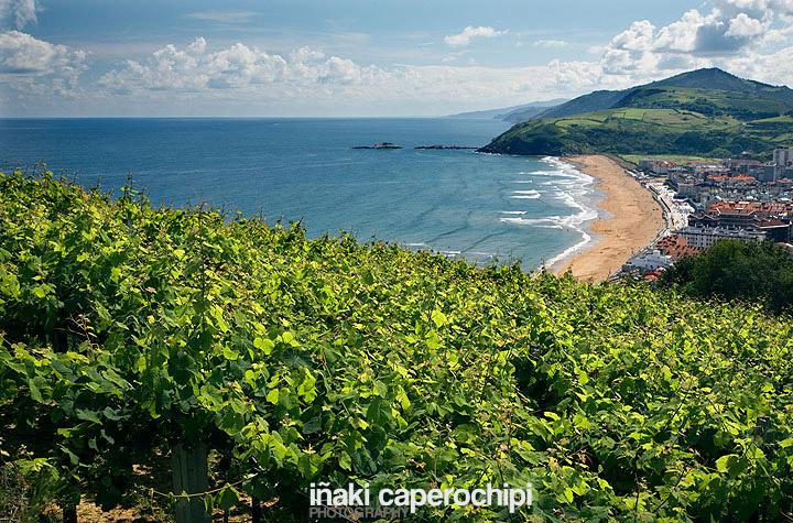 Viñas de Txakoli y playa de Zarautz