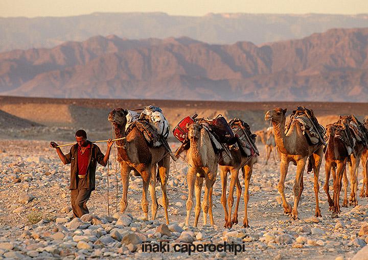 Caravanas de camellos en Ahmed Ale